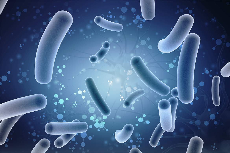 terapia probiotica