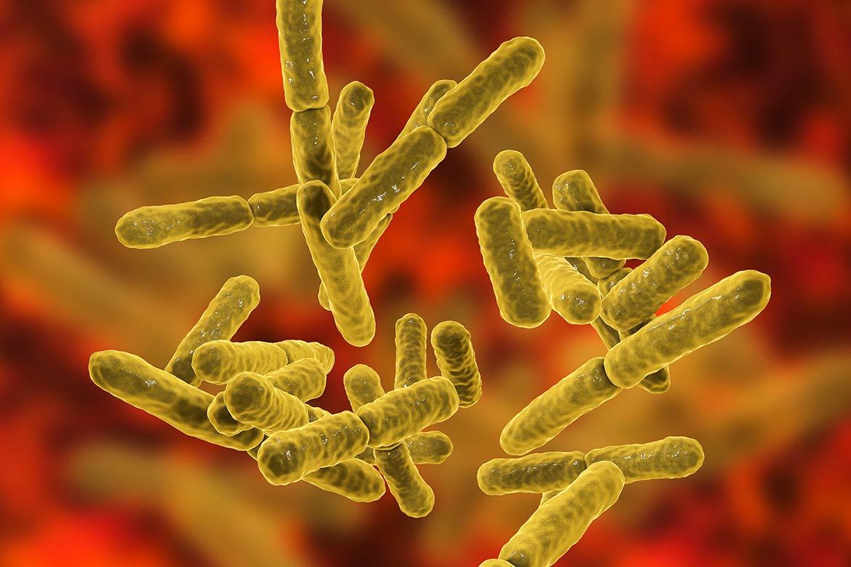 microbiota intestinale e cervello