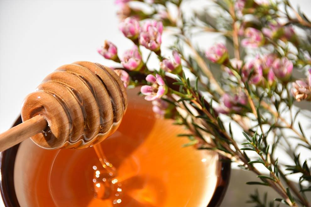 miele-di-manuka-proprieta-terapeutiche