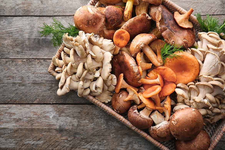 funghi-colesterolo_1