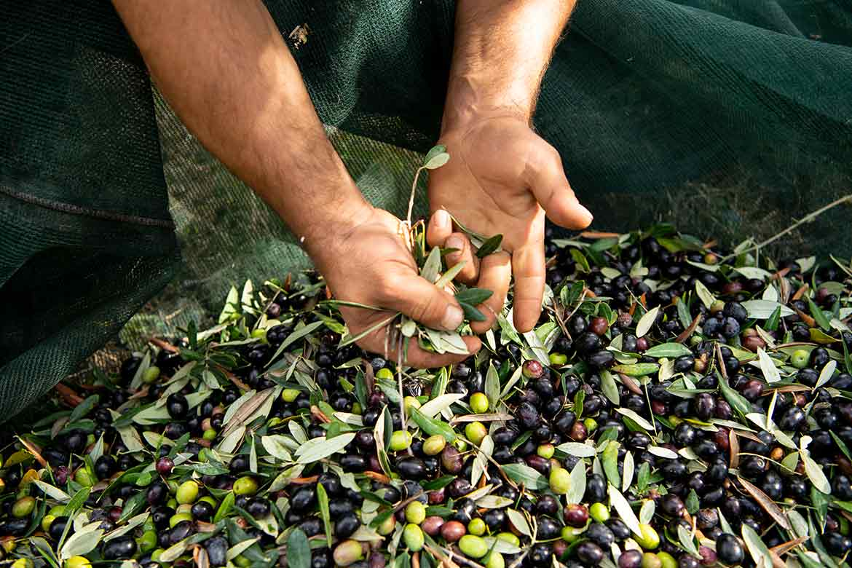 olio-oliva-benefici
