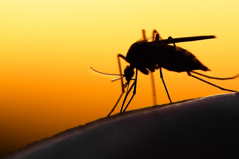 allergie-a-punture-di-zanzara